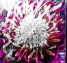 AdobePhotoshopExpress_2015-07-15_05-01-44-0400