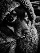 AdobePhotoshopExpress_2015-07-15_17-35-51-0400