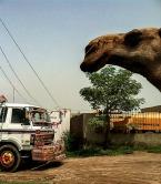 CamelStroll